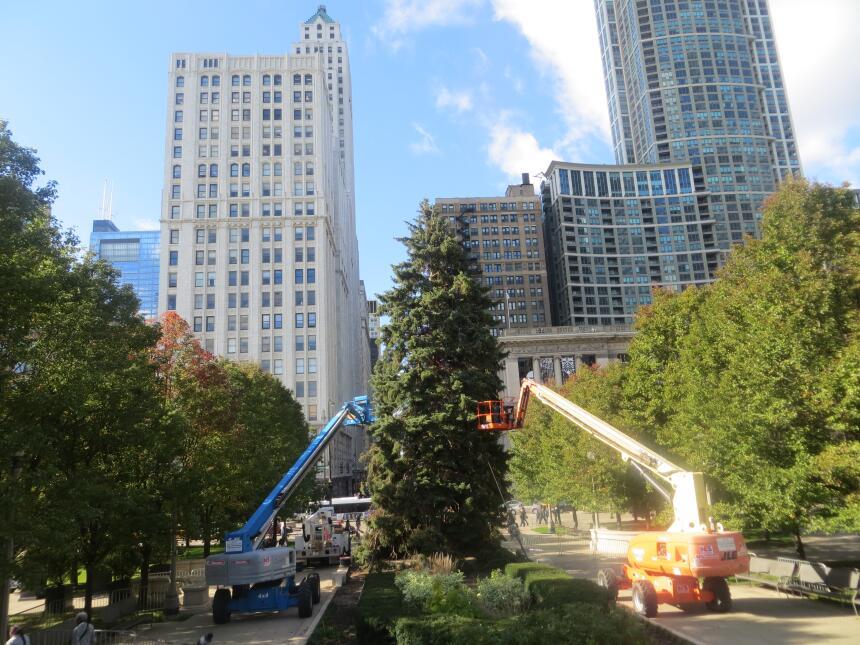 Ya empezaron ha colocar el árbol de Navidad en el Millenium Park.