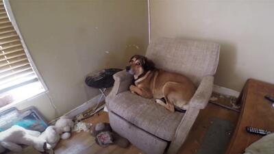 Uno de los cuatro perros rescatados, este vivía en medio de heces y desh...