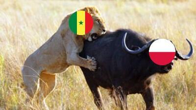Memelogía | Senegal tumbó a Polonia y así se vivió en los mejores memes
