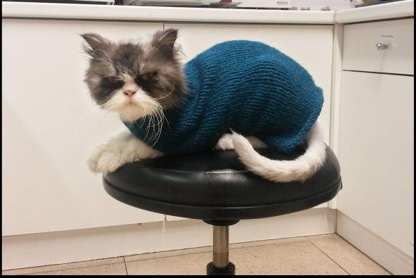 Después de unos meses en la clínica este gato persa está irreconocible y...