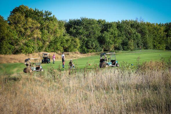 Se puede jugar en grandes áreas verdes o en campos de golf que tengan lo...