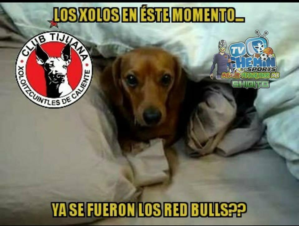 Los memes de la eliminación de  Xolos y Tigres 29177977-1620343628048326...