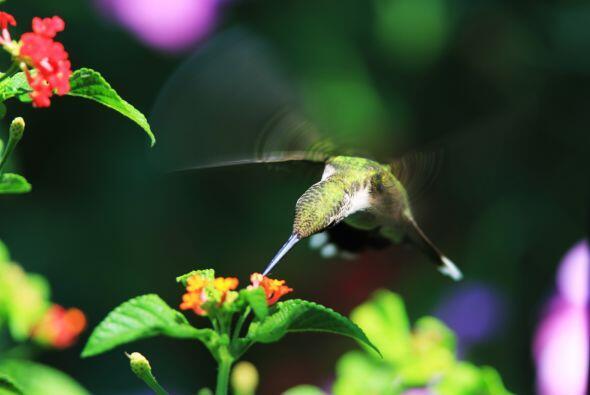El crecimiento de la maleza favorece la presencia de mariposas y colibrís.
