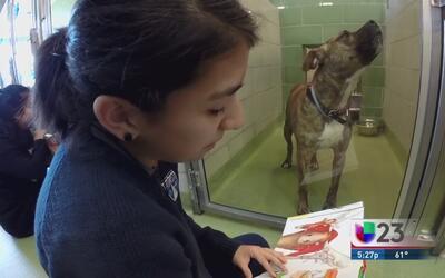 Programa de lectura para perros en Dallas