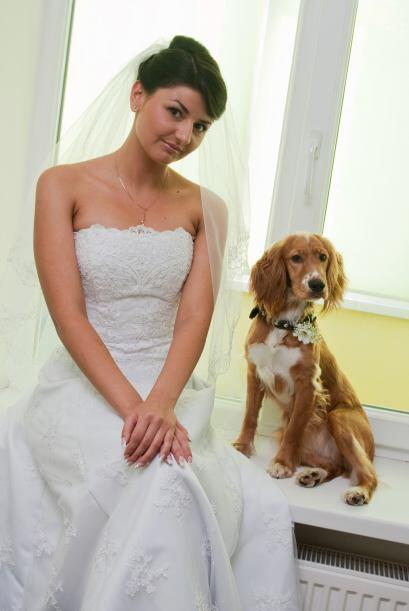 Por último para que tu perro luzca elegante y en sintonía con la ocasión...