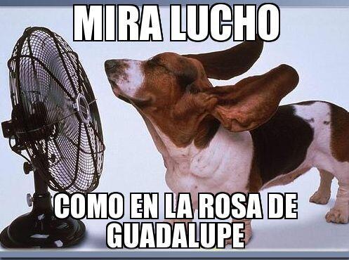 """""""Mira Lucho como en La Rosa de Guadalupe""""."""