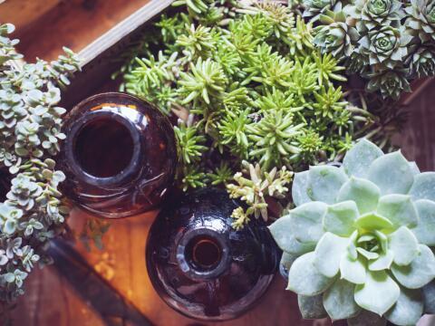 jardín con plantas nativas