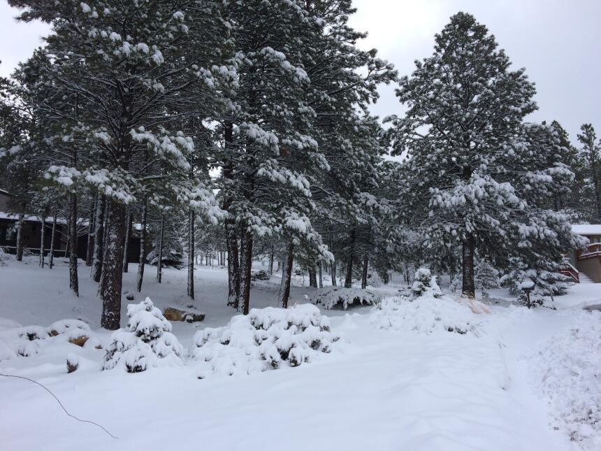 En fotos: La ciudad de Flagstaff amaneció cubierta de nieve IMG_3795.JPG