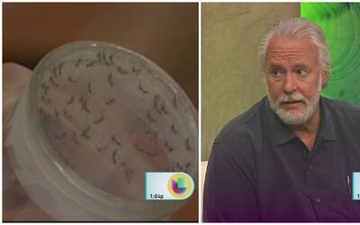 Puerto Rico tiene que tomar el zika en serio