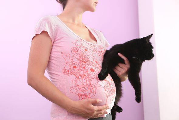 Otro mito es que al convivir con un gato, no te puedes acercar a él dura...