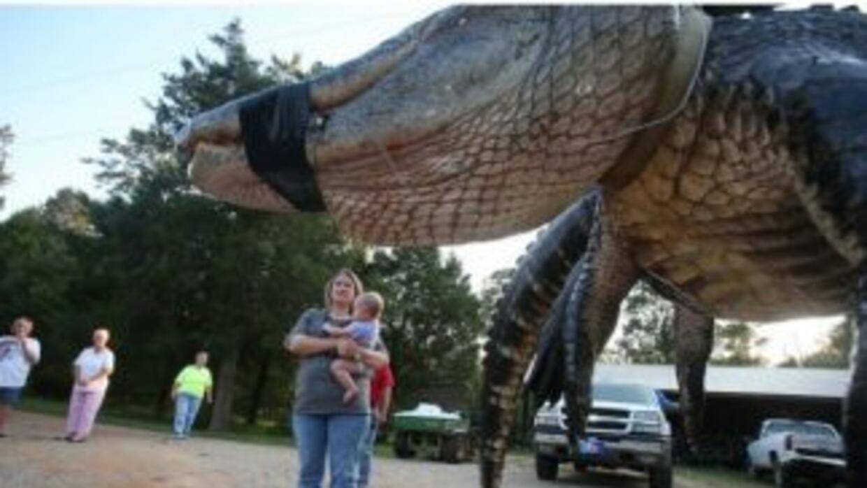 Un caiman gigante fue hallado en el río Albama. (Imagen de Twitter)