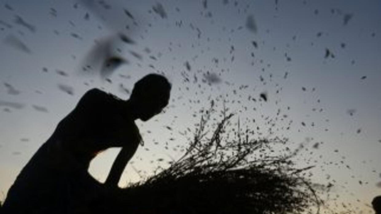 Decenas de agricultores han optado por el suicidio luego de que fuerte t...