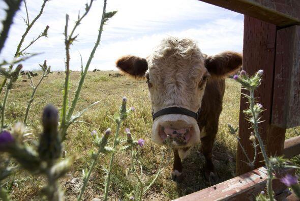 Como no tuvo interacción con los de su especie, obviamente 'Milks...