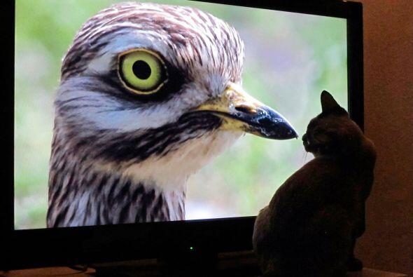 Cuando pusieron el programa de la naturaleza, Coco comenzó a verl...
