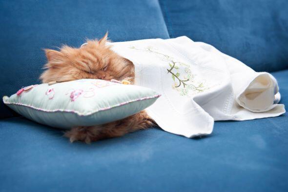 Cuando duerme no luce tan amenazante, ¿no lo crees?