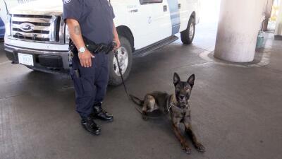 Los perros K9 de la frontera encargados de prevenir la entrada al país d...