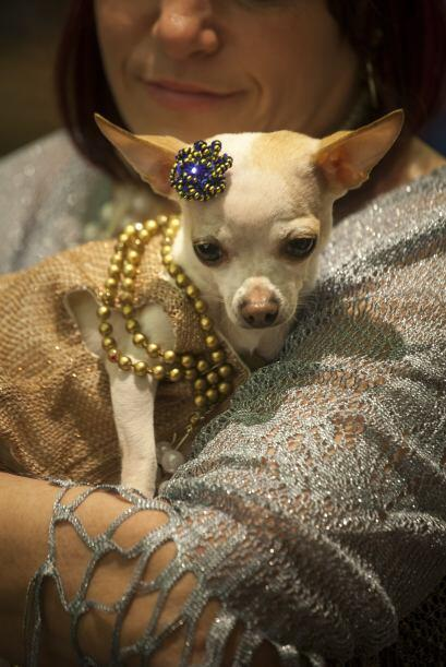 ¡SEMANA DE LA MODA… CANINA!  Nueva York celebra la Semana de la Mo...
