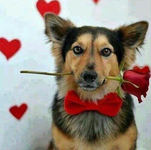 ¿O prefieres una flor?