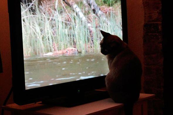 Coco no puede dejar de ver los programas que pasan en la TV.