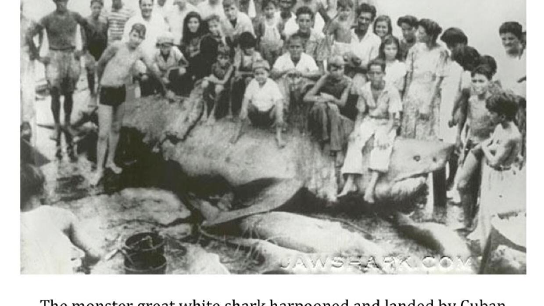 'El Monstruo de Cojimar', el tiburón blanco más grande jamás capturado.