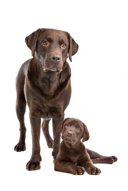 Si lo que buscas es un perro inteligente, conoce a los canes más brillan...