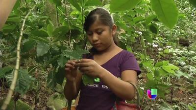 Niños jornaleros en México