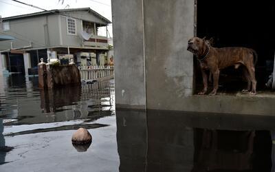 Imágenes de las calles inundadas de Juana Matos, en el municipio...