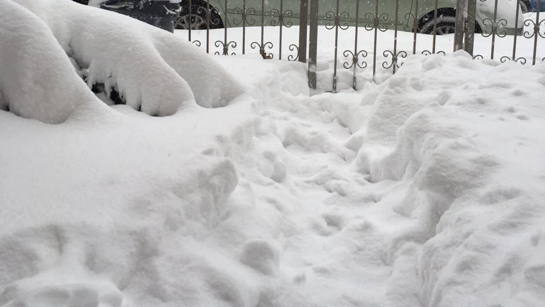 Brooklyn nevado