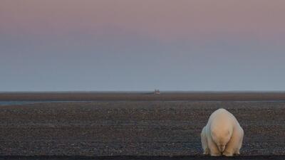 Un oso en duelo y un océano de plástico: estas son las mejores fotos de la naturaleza para National Geographic