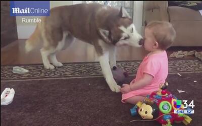¡Vaya besito entre bebé y su mascota!