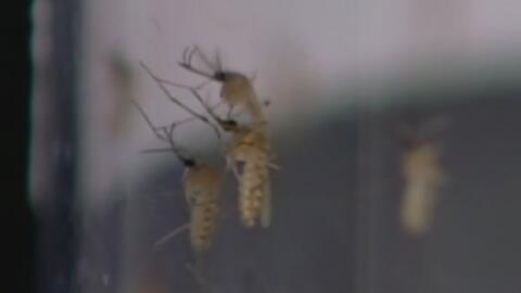 Segunda muerte en el condado de Dallas por el virus del Nilo de Occidente