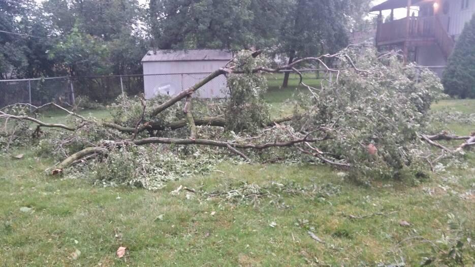 Imágenes de árboles caídos en Streamwood