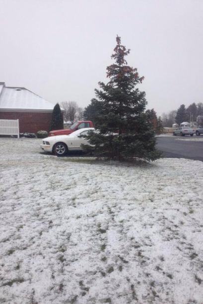 Ver este pino rodeado por la nieve nos hace recordar la Navidad. Imagen...