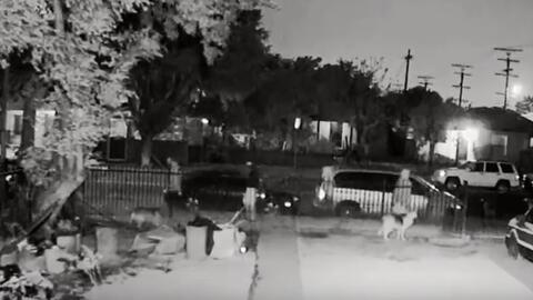 La Policía de Los Ángeles busca a los sospechosos acusados dispararle a...