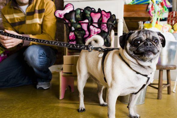 Investiga. Antes de adquirir una mascota, debes hacer una minuciosa inda...
