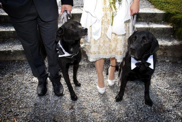 Una de las nuevas tendencias en las ceremonias de boda, es que tu perro...