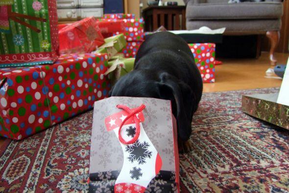¡Ya no puede esperar más! Tranquilo Crusoe, la Navidad ya está a la vuel...