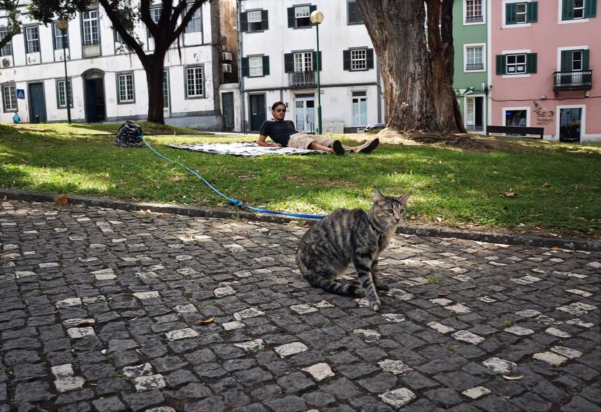 Pareja y su gato, navegan por el mundo