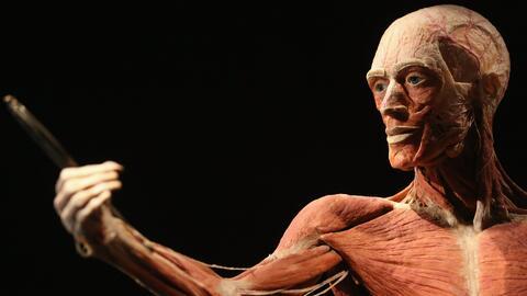 'Body Worlds', la exitosa exposición que regresa al Museo de Ciencias de...