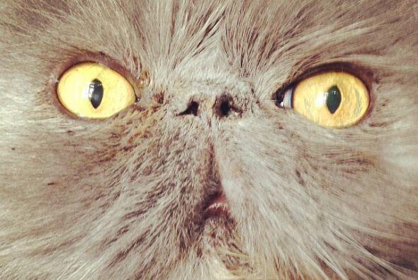 Ella misma fotografía a sus gatitos y le pone divertidos títulos a las f...