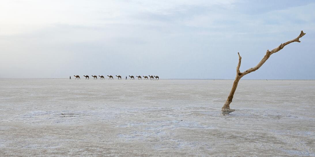 9 instantes de la naturaleza que compiten en concurso mundial de foto 21...