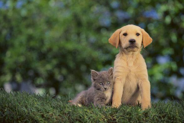 Ya sea que te decidas por un perro o un gato, lo importante es que tú va...