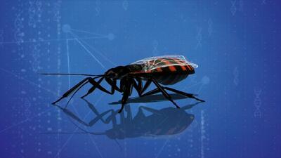 Aumentan los casos de enfermedad de Chagas en EEUU