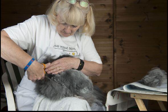Hace 40 años Sally adoptó su primer conejo de Angora, ya que uno de sus...