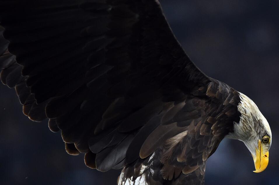 No es 'fake news': El gallo de corral gigante sí existe y esta es la exp...