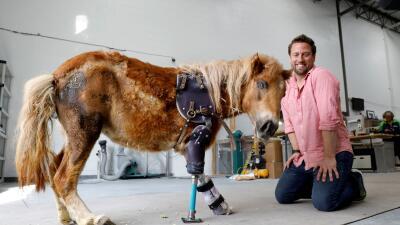 En fotos: El genio que hace caminar a los animales que perdieron sus patas