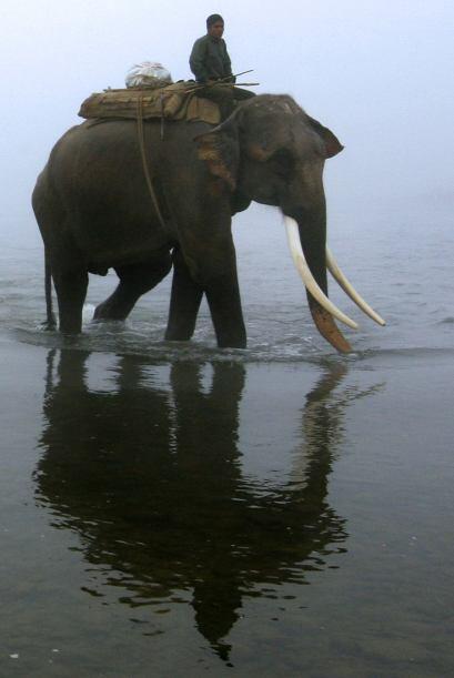 El singular deporte se celebra en Nepal, Sri Lanka, Rajasthan en India y...