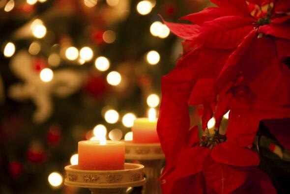 """Flores. La flor de Navidad más popular es latinoamericana. La famosa """"fl..."""