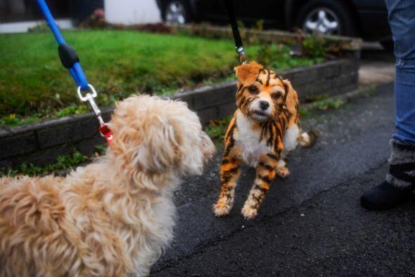 Las pinturas para perros son una novedad para los amantes de las extrava...
