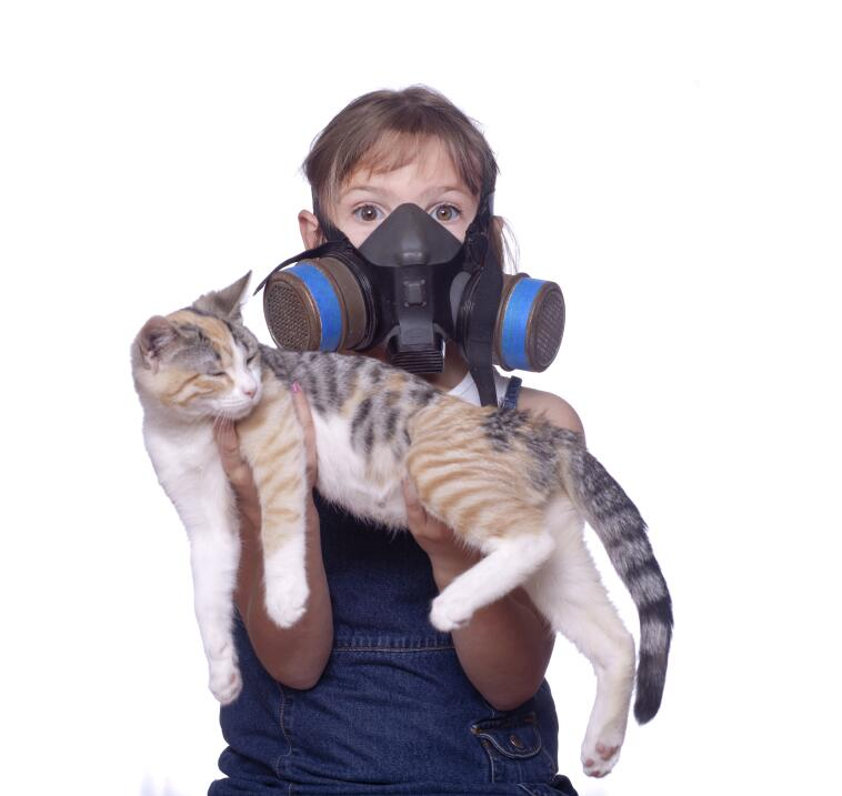 Gatos protectores